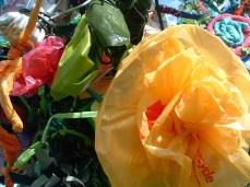 tr flower