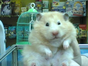 Fredericton Pets Unlimited faces charges for 'fat shaming' hamster