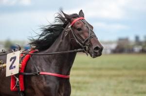 Horse Racing N.B. hosts demolition derby to pay off FREX bills