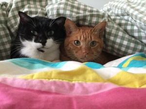 Saint John man fears his cats have been radicalized