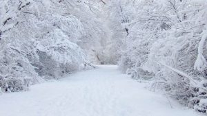 Snow! Snow! Snow! Snow! Snow! Snow! Snow! Snow!