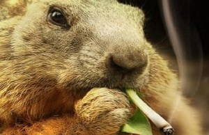 Viral video of beaver smoking cigarette sparks outrage online