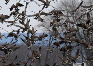 Trump warns 'Canada goose caravans' heading toward U.S. border