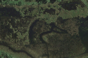 There's a big, wet dick hidden on a St. John River isle. Duck. I meant duck!