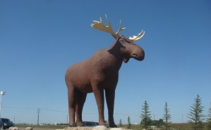 Moosehead donates $25K to make Mac the Moose the 'world's longest,' if you know what we mean