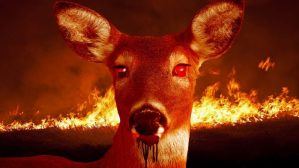 'Zombie deer' feast on Rothesay and Quispamsis residents
