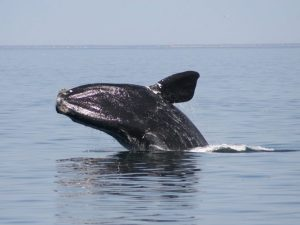 9th whale speaks out after being reported dead by DFO
