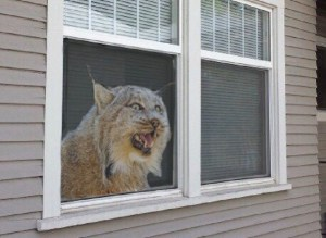 Campbellton man misunderstands stuffed animal game, instead places terrifying taxidermy in window