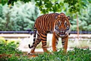 Cherry Brook Zoo announces permanent closure, sets animals loose in Saint John