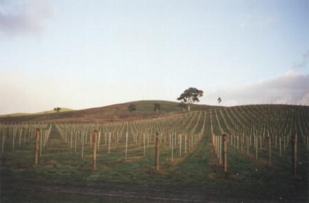 Vineyard in Murrindindi