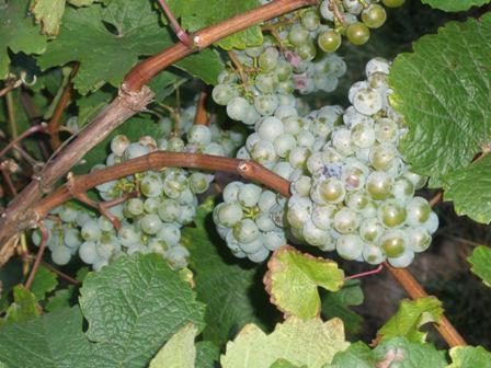 The best 10 German dry Riesling wines (1/2)