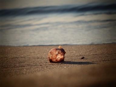 """""""Silence at the Beach"""""""