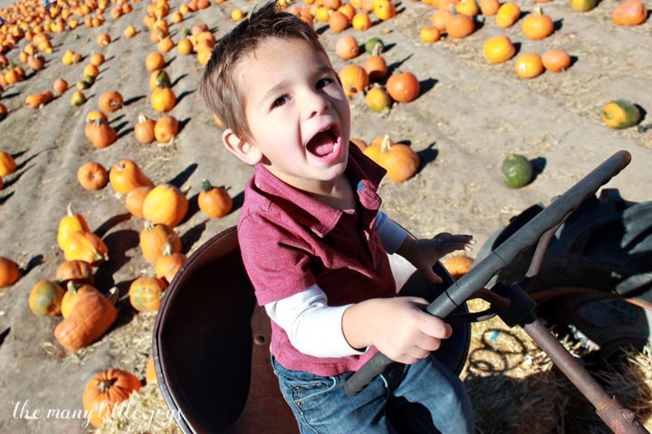 many-little-joys-of-october-tractor