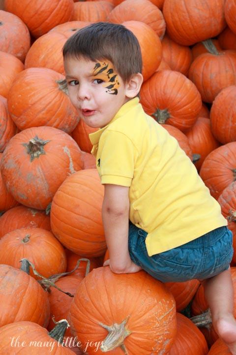 many-little-joys-of-october-pile-of-pumpkins