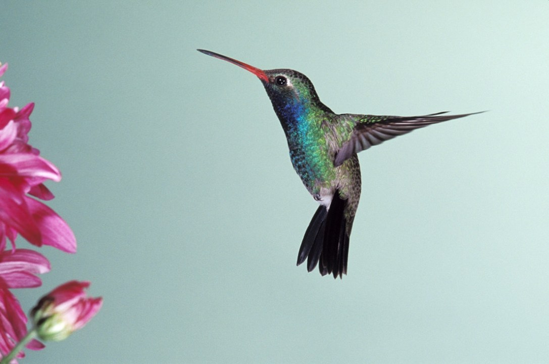 How does Google's new Hummingbird Search Algorithm affect you?