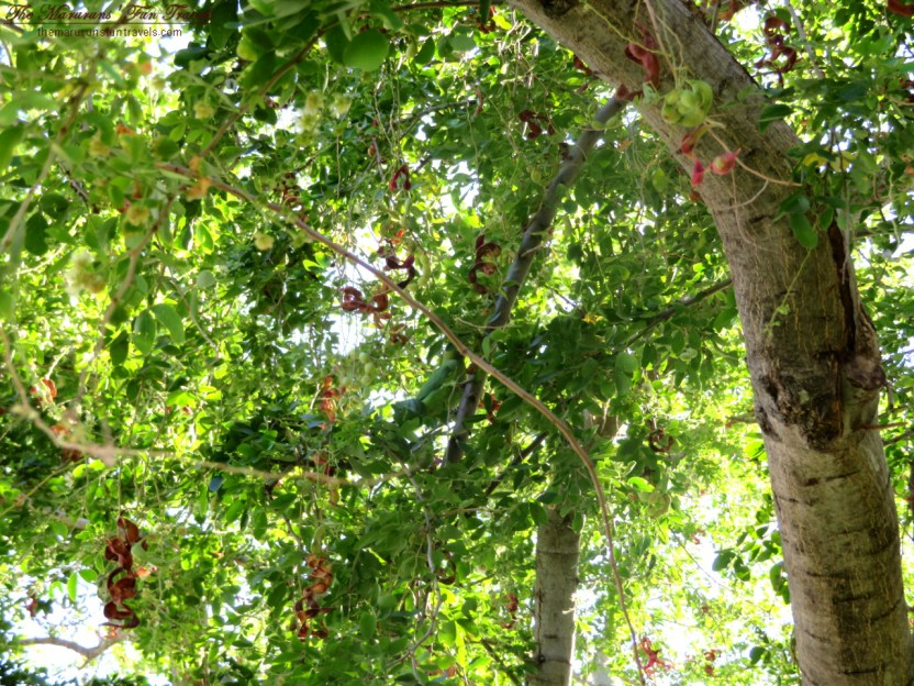 A Green Parrot in The Trees