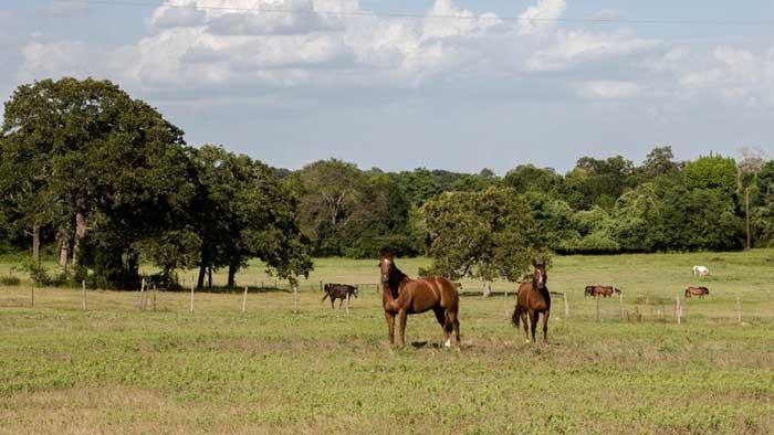 Still Creak Ranch property