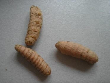 Turmeric tubers