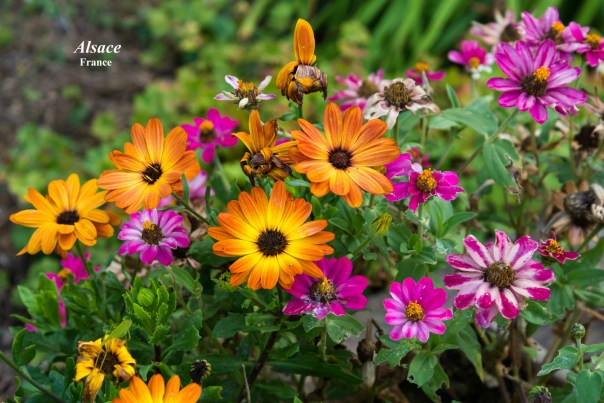 031-Exotic-flowers-of-Alsace-1