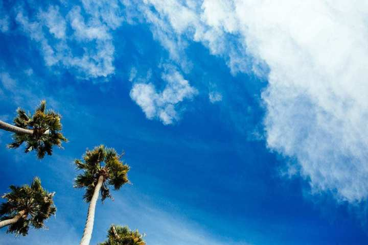 Remember - palm trees in Santa Barbara