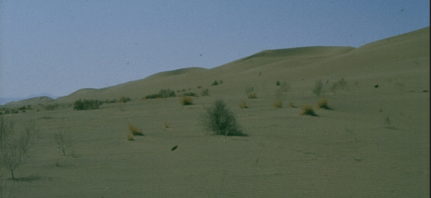 Sand Dune and Natural Vegetation