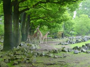Savanne Dierenpark Emmen