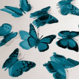 Teal butterfly decor, by BUTTERFLYBAZAAR on etsy.com