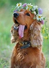 Flower crown for your furry friend {via buzzfeed.com}