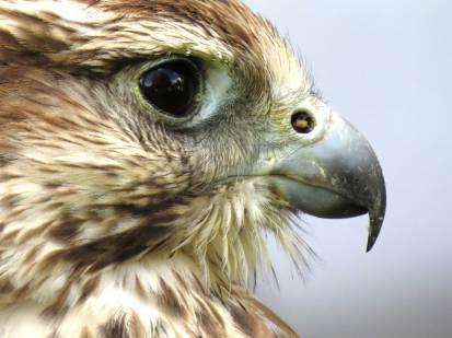 gallery-bird-2