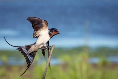 gallery-bird-1
