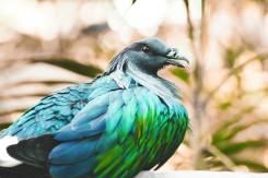 gallery-bird-3