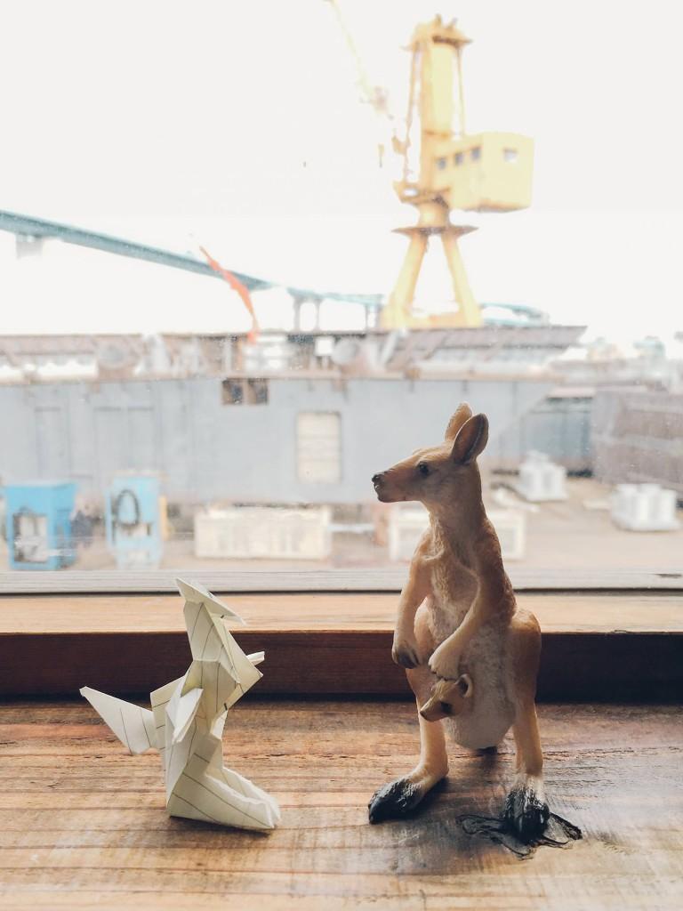 kangaroo_vsco_mini