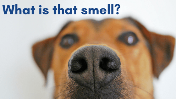 What is that smell_