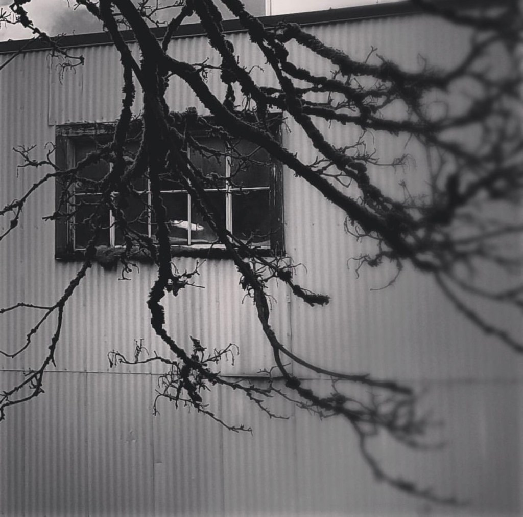 Anxiety Letters. Creepy Branches obscuring view. www.themessybadass.com Ashley Allyn