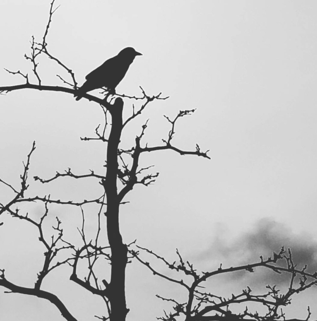 Anxiety Letters A Black Crow on Branches www.themessybadass.com Ashley Allyn
