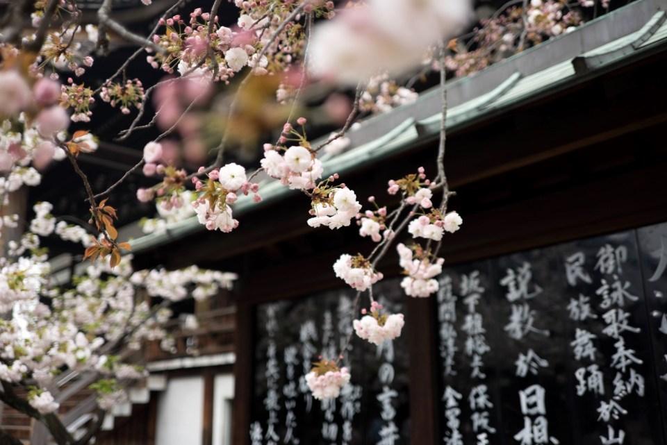 Traveller's Essentials: Japan Blossoming