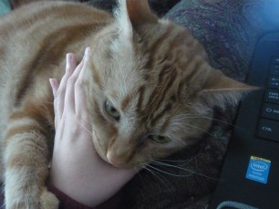 This is my baby clamping down on my hand because he's really a vampire ;_; He really was on it, I couldn't move my hand without risk of him tearing a chunk off.
