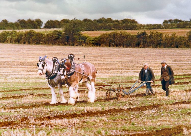 traditional farmer horse plough
