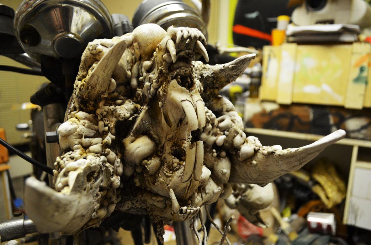 close up skull