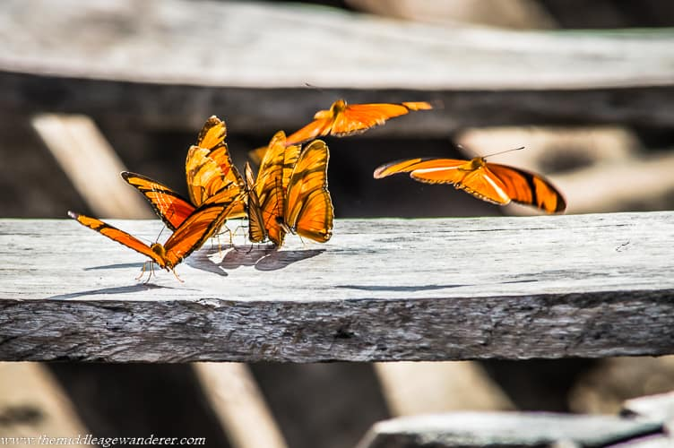 Butterflies in the Peruvian Amazon
