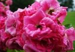 Flower 3 for MG