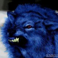 DA poo blue wolf