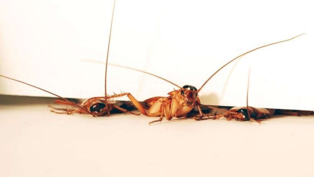 democratic alliance john steenhuisen cockroach