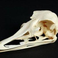 Oudtshoorn corruption dead ostrich