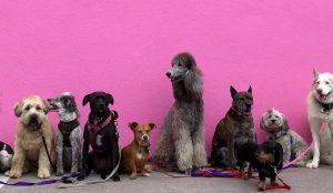 Nomi per cani: i millennial chiamano i pet con i personaggi di Trono di Spade (Khaleesi) e Stranger Things (Joyce)