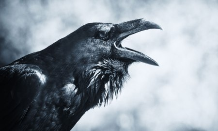 Raven whispers for man to imagine life without the children.