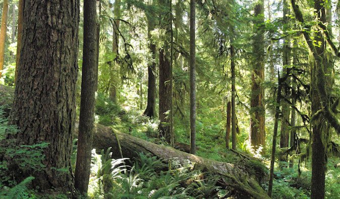 Forest_on_Olympic_National_Park_Three_Lakes_Trail-1