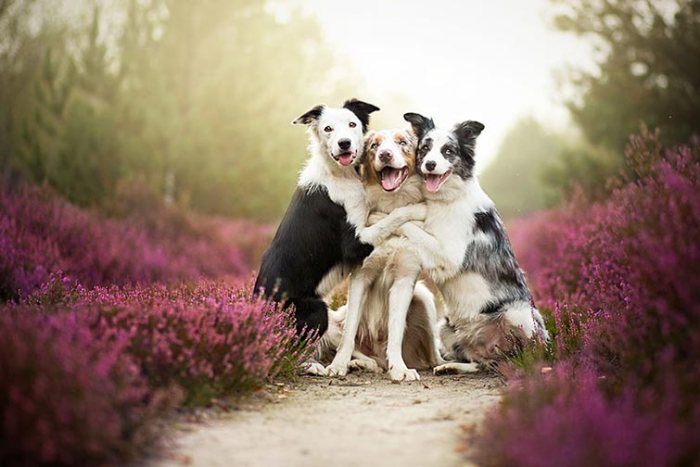 Heartwarming Dog Portraits By 19-Year-Old Polish Photographer