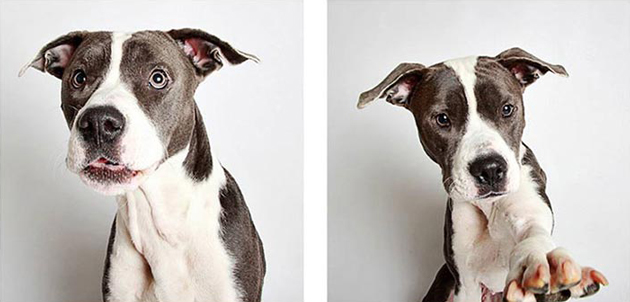 Hilarious Photo Booth Portraits of Dogs Help Increase Adoption Rates