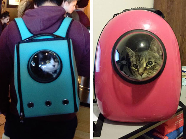 Colorful Cat Backpacks Feature Bubble Window for Traveling like an Astronaut